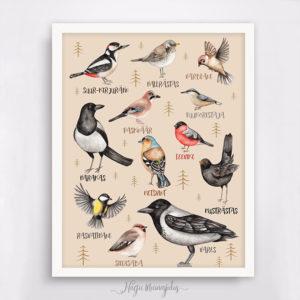 Eesti lindudega poster laste tuppa, dekoratsioon seinale