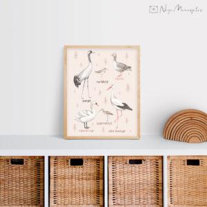 Eesti linnud postril lasteuppa dekoratsioon, luik, sookurg, toonekurg
