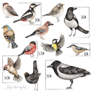 Eesti lindudega seinakleepsude, seinakleebiste komplekt lastele